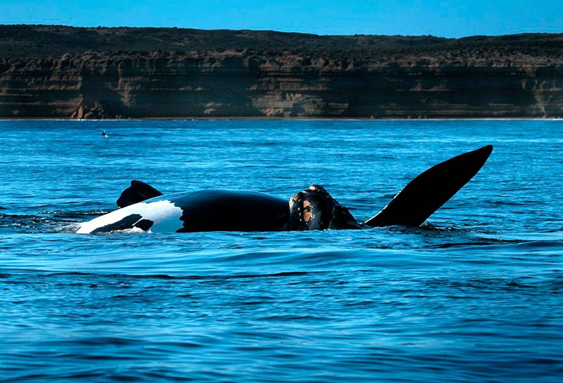 クジラの町