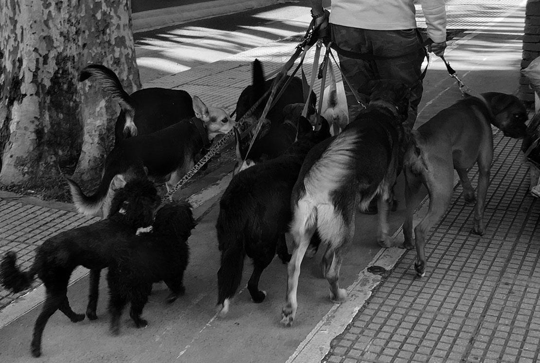 犬の散歩屋さん